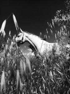Yegua en el campo
