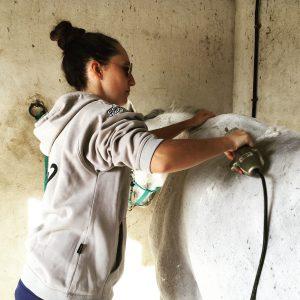 Esquilar a un caballo
