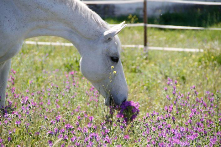 nmv-horses-consultorio-veterinario-caballo