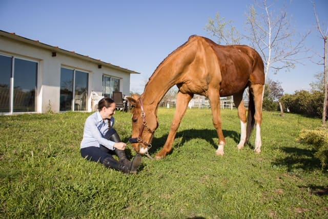 sesion-antonio-ranea-caballo