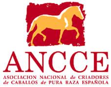 logo-ancce