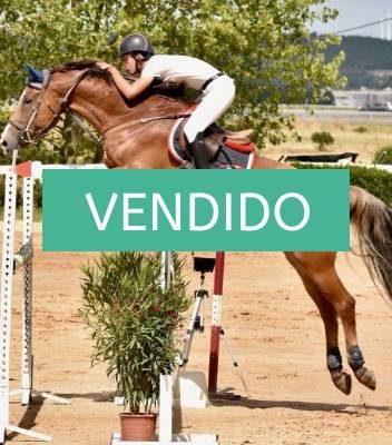 NMV market-caballo-vendido-salto