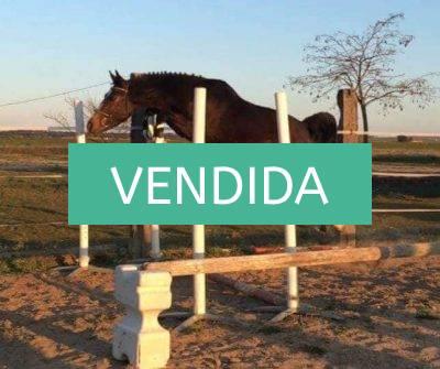 NMV market. venta de caballos. blog de venta de caballos