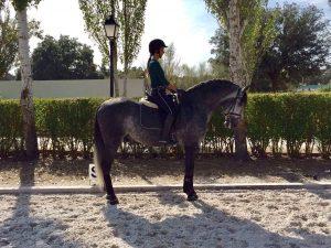 sara_houston_mente_y_riendas-caballo