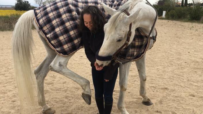 estiramientos ipsi equidimania nmv horses