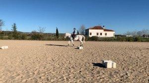 ejercicios sobre blocs para hacer con tu caballo paso, trote y galope