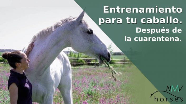entrenamiento para tu caballo para despues de la cuarentena