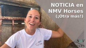 noticia nmv horses nace hipica para peques nmv kids