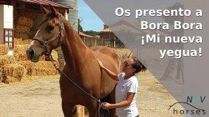 nuevo caballo nueva yegua bora bora