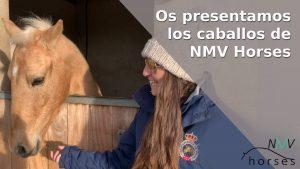 los caballos de nmv horses