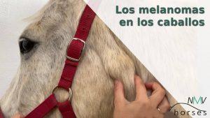 los melanomas en los caballos
