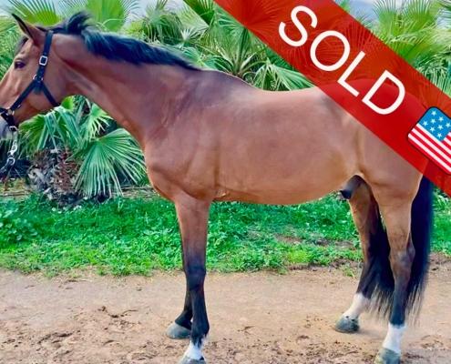 venta de caballos de salto